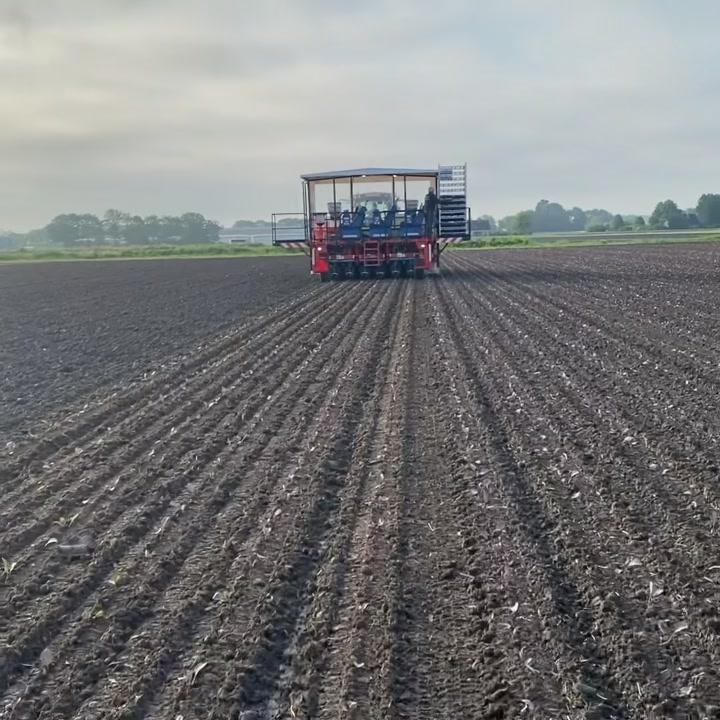 Vorige week hebben wij paarse spitskool geplant met de automatische p...